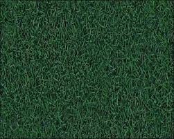 30 Free Grass Texture for Nature Lovers