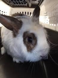 petsmart animals bunny. Unique Petsmart Rabbit Rabbits Cute In Petsmart Animals Bunny O