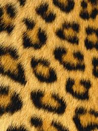 animal print wallpaper for iphone. Contemporary Wallpaper Furry Leopard Print Wallpaper On Animal For Iphone A