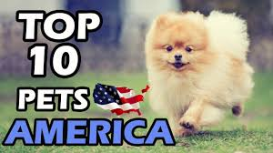 Most Popular Pets Top 10 Most Popular Pets In America