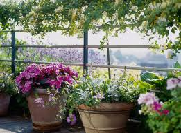 basics of gardening for beginners. 10 common container gardening mistakes and how to avoid them basics of for beginners