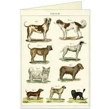 Dog Chart Greeting Card