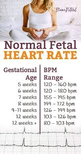 Normal Fetal Heart Rate Is Your Baby On Track Normal