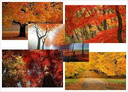 Windows Fall Theme Autumn Theme For Windows 7 Holidays And Seasons Autumn