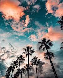 palm trees sunset tumblr. Pinterest: @mylittlejourney | Tumblr: @toxicangel Twitter: @stef_giordano Ig: @stefgphotography Palm Trees Sunset Tumblr