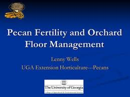 Uga Pecan Pollination Chart Pecan Production 101 Sunlight Crop Load Management