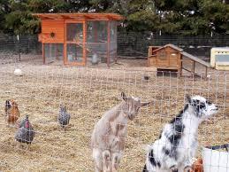 Abby U0026 Johnu0027s California Chicken Coop  Garden Coop Plans  Coop Backyard Chicken Blog