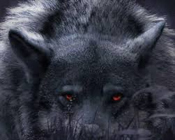 black wolf with red eyes wallpaper. FileBlack Wolf With Red Eyesjpg Intended Black Eyes Wallpaper