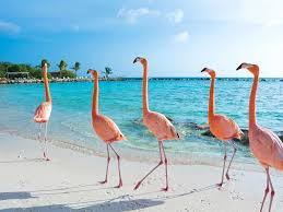 Discover aruba cloud, the cloud for you! Aruba Travel Guide Vacation In Aruba Islands