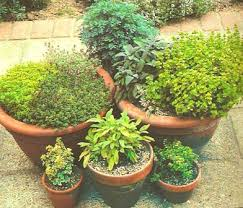 Container Garden Ideas For Any Household  Martha StewartContainer Herb Garden Plans