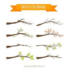 tree branch with leaves vector. variety of tree branches branch with leaves vector