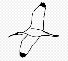 birds flying black and white clipart. Perfect Birds Ibis Scalable Vector Graphics Clip Art  Birds Flying Clipart On Black And White I
