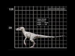 Velociraptor Size Chart Velociraptor Movie Canon Jurassic Park Wiki Fandom