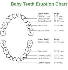 Teeth March 2017 Babycenter Australia