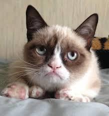 grumpy cat i had a birthday once. Modren Cat The Lesser Used Original Grumpy Cat Photo Intended Cat I Had A Birthday Once