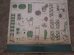Vintage Nystrom Canvas Industrial Algae School Pull Down Map