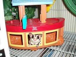 question what kind of toys can i for my sugar glider