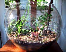 how to make your own terrarium. Perfect How Terrarium Terrariums Glass Bowl Bowl DIY Howto How  To Make A  To Make Your Own Terrarium