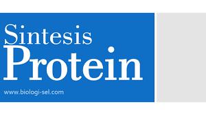 Apa itu protein nabati protein nabati adalah jenis sumber protein yang berasal dari tanaman. Sintesis Protein Dan Kode Genetik Biologi Sel
