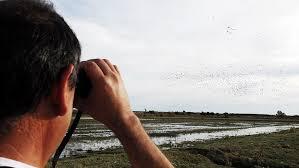 Resultado de imagen de bird migration
