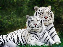 beautiful wild animals wallpapers. Modren Wild Animals  Beautiful Wild Desktop Wallpapers Photography  Latest  Cool  For Animals Wallpapers L