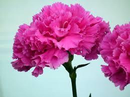 Wallpaper flower Iphone Wallpaper Download Setaswall Hot Pink Flower Wallpaper 22 3648x2736