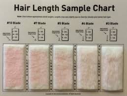 Hair Length Sample Chart Shave Blade Sample Chart For Grooming Dog Grooming