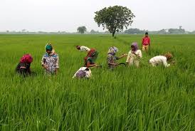s food security programme to cost billion a year paswan