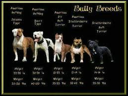 English Bulldog Bully Breeds Chart Precious Dogs Bully