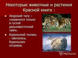 Животные тайги красная книга россии животные тайги красная книга россии