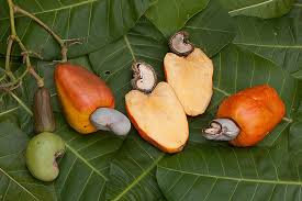Image result for cashew