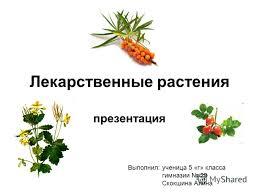 Презентация на тему Лекарственные растения Выполнил ученица  1 Лекарственные растения презентация Выполнил ученица 5 г класса гимназии 29 Скокшина Алина