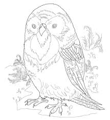 Kakapo New Zealand Coloring Page - Countries & Culture - Pictures ...
