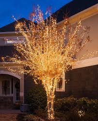 lighting outdoor trees. Light Wrapped Trees, Tree Wrapping Lighting Outdoor Trees