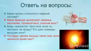 Презентация на тему Презентация к уроку по окружающему миру  7 Ответь на вопросы Какие органы относятся к нервной системе