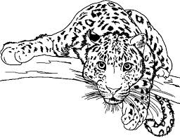 Small Picture Drawn leopard coloring page Pencil and in color drawn leopard