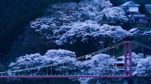 3840x2160 Japan Bridge Sakura 4k Wallpaper Hd Nature 4k