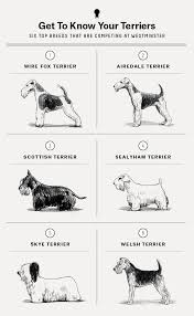 Terriers Were Once The Greatest Dogs In The World