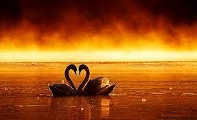 Love Swan Couple Wallpaper Hd ...