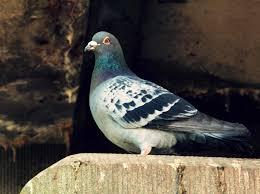 stop pigeons sitting on my window ledge