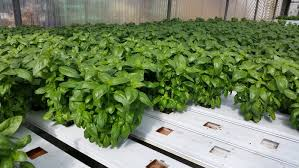 denver garden centers. And, Since We Grow Our Own Plants, Prices Are Very Affordable. Come On In And Check Us Out For All Of Your Gardening Needs! Denver Garden Centers 4