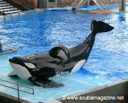 tilikum isolated. Exellent Isolated If  Throughout Tilikum Isolated D