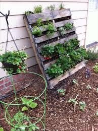 elegant pallet vegetable garden diy vertical pallet vegetable garden 99 pallets