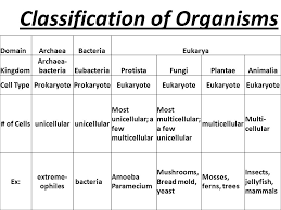 November 16 2015 Title Classification Of Organisms Ppt