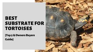 best substrate for tortoises top 5