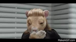 kia soul hamster gif. Brilliant Soul 2015 Kia Soul EV Hamster Commercial Featuring Maroon 5 On Gif