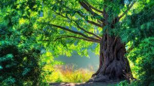 wallpaper hd 1080p nature green. Beautiful Nature Download For Wallpaper Hd 1080p Nature Green U