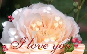 Flower I Love You Wallpaper ...