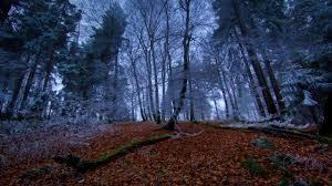 Cool Forest Backgrounds Cool Forest Backgrounds R Nongzico