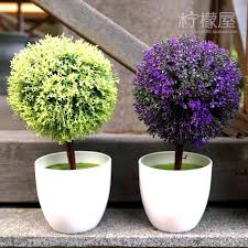 office bonsai. 2017 small potted plants indoor decoration home furnishing creative office desk mini bonsai plant simulation from pengyaod76 3659 dhgatecom